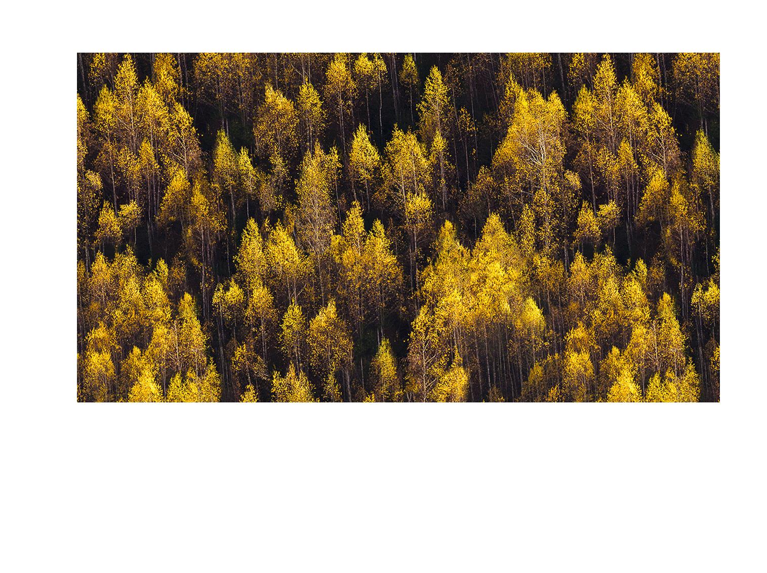 باربارا | Barbara